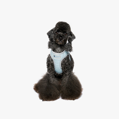 Leather Harness2 (Sky Blue)